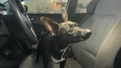 Photo of Dog drives owner's car for almost one hour in Florida