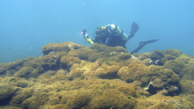 Photo of Aggressive seaweed smothers one of world's most remote reefs