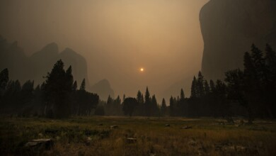 Photo of In a Historic Wildfire Season, It's Time to Follow the Lead of Young Campaigners